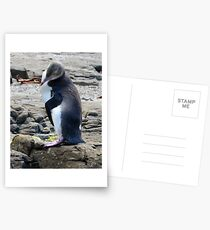 Yellow Eyed Penguin Postcards