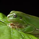 Frog  by Tim  Geraghty-Groves