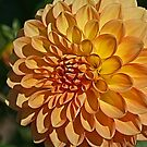 Dahlia of Summer Past by Monnie Ryan