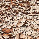 Cracked earth by Konstantinos Arvanitopoulos