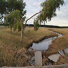Creek after the floods by trishringe