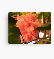 Floral time, Garden House - Antofagasta  Canvas Print
