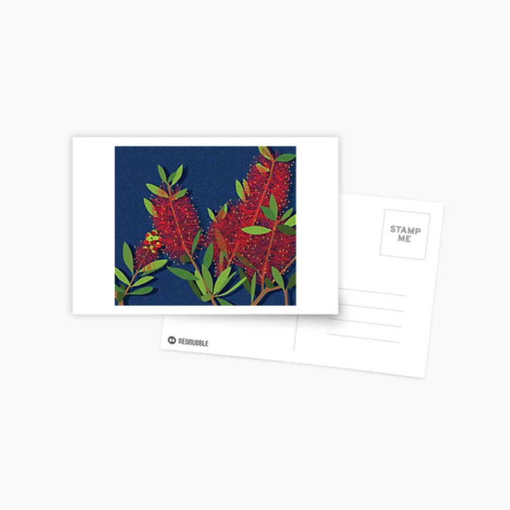 Red Bottlebrush Flowers Postcard