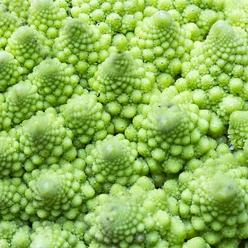 Romanesco Broccoli by alexrvan