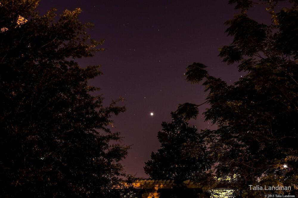 Venus and Jupiter in Spring Sky by Talia Landman
