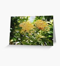 Barbados Spring Theme - Pink Ixora If you like, please purchase, try a cell phone cover thanks Greeting Card
