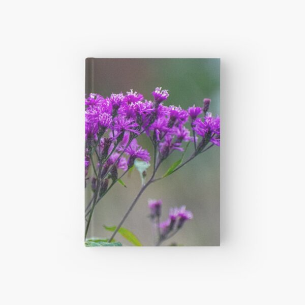 Tall Ironweed Hardcover Journal