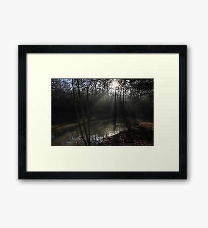 The Sun in the Woods Framed Print