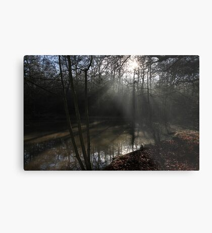 The Sun in the Woods Metal Print