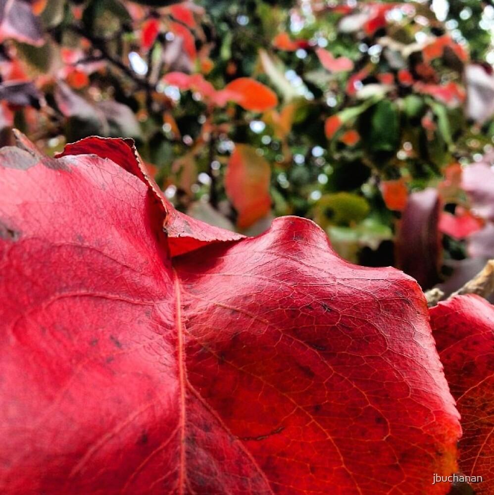 Macro Deep Red Autumn Leaf by jbuchanan