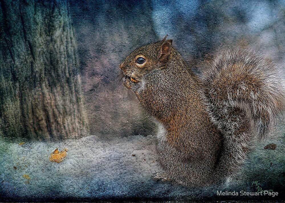 """Twilight Squirrel"" by Melinda Stewart Page"