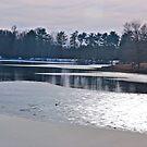 Swan Lake Winterized by Gordon Taylor