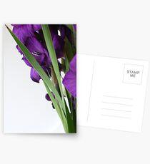 Modern Flowers Postcards