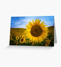 Sunflower Field in Valensole - Provence, France Greeting Card