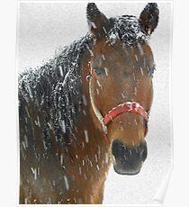Nayyyyyyhbors Horse in the snow Poster