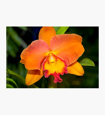Orglade's Charm Hybrid Photographic Print