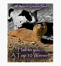All Animals Great and Smaller Banner Challenge Photographic Print