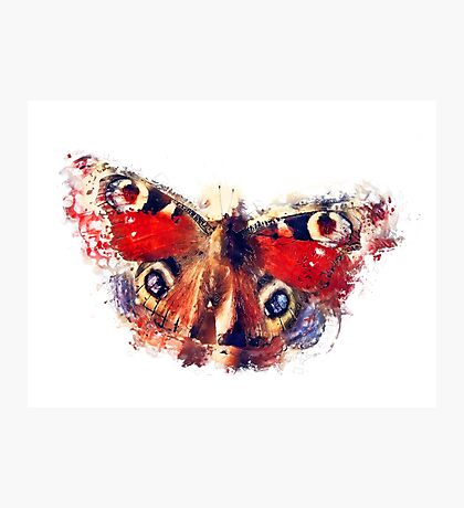 Butterfly - European Peacock Photographic Print