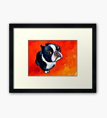 Boston Terrier dog #1 painting Svetlana Novikova Framed Print