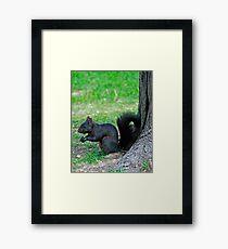Black Squirrell Framed Print