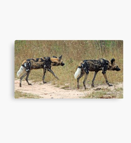 Wild dogs on the hunt Canvas Print