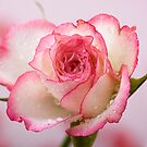 Strawberries And Cream II by Lynne Morris