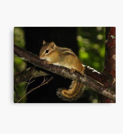 Eastern Chipmunk in Enchanted Forest Canvas Print