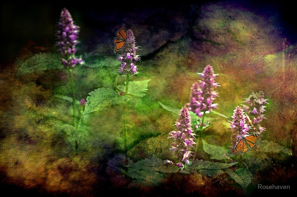 """""""Just An Old Fashioned Garden ...""""  by Rosehaven"""