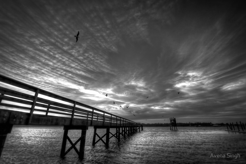 Bird Night at the Dock by Avena Singh
