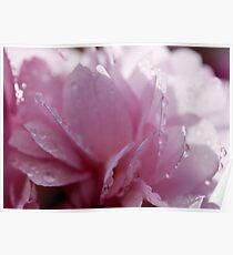 Spring .. Ornamental Cherry Blossom Poster