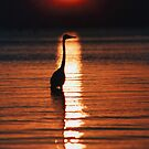 """Heron Sunset"" - sunset with great blue heron in front by ArtThatSmiles"
