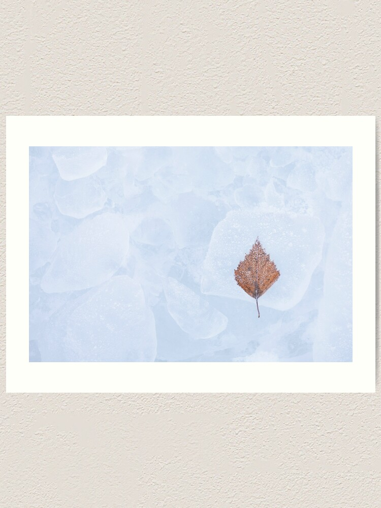Alternate view of One birch tree leaf frozen on ice Art Print