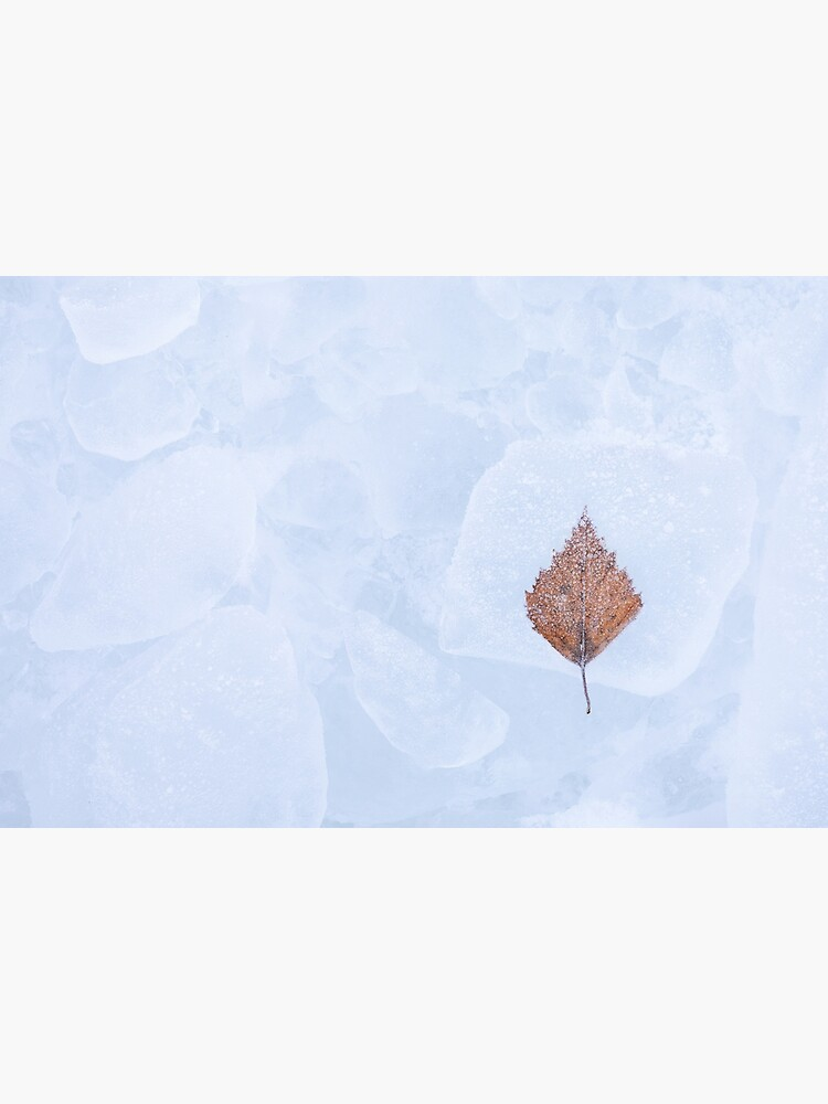 One birch tree leaf frozen on ice by Juhku