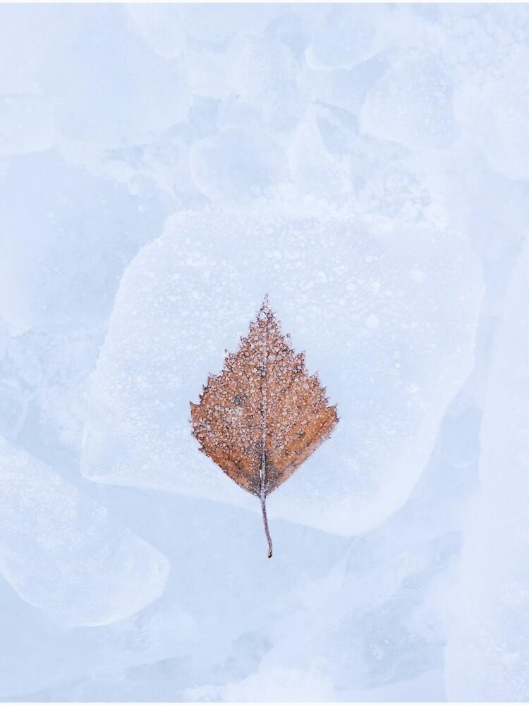 One birch tree leaf frozen on ice by Juhku