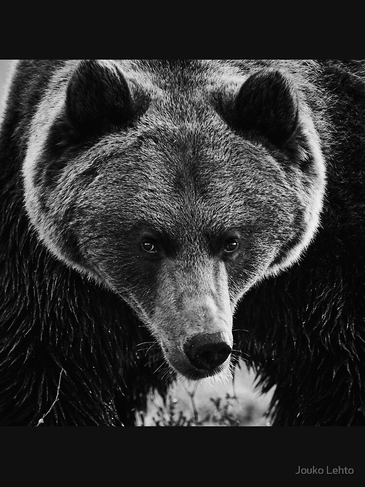 Drama king. Brown Bear in bw by JoukoKLehto