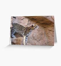Ocelot ~ Captive Greeting Card