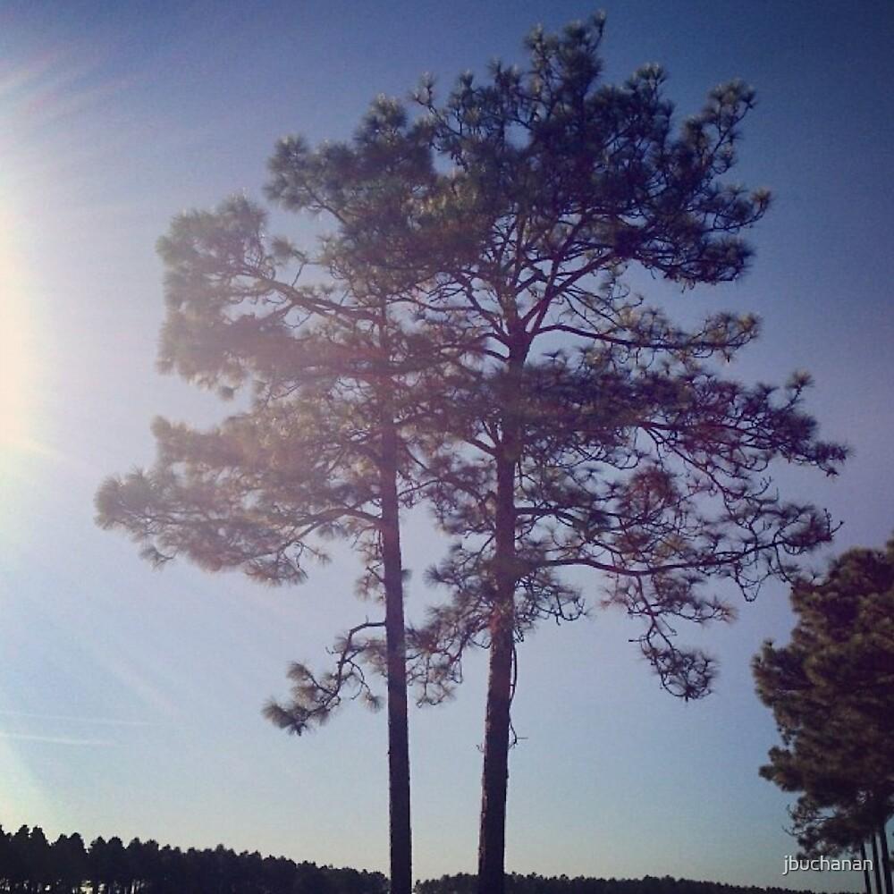 Twin Trees by jbuchanan