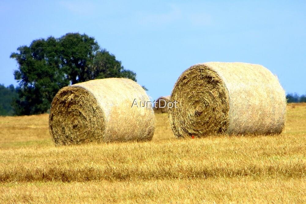 Hay Rolls by AuntDot