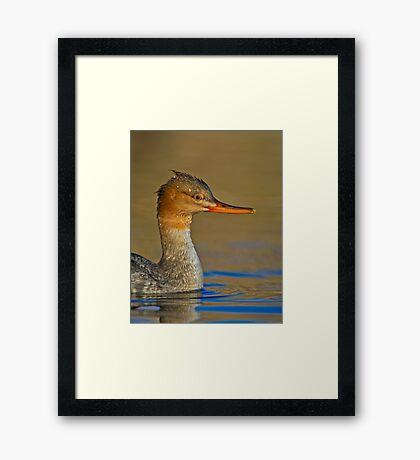 Duck, Hide Framed Print