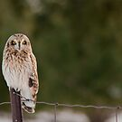 Short Eared Owl in the Snow by Jean-Paul Fournier