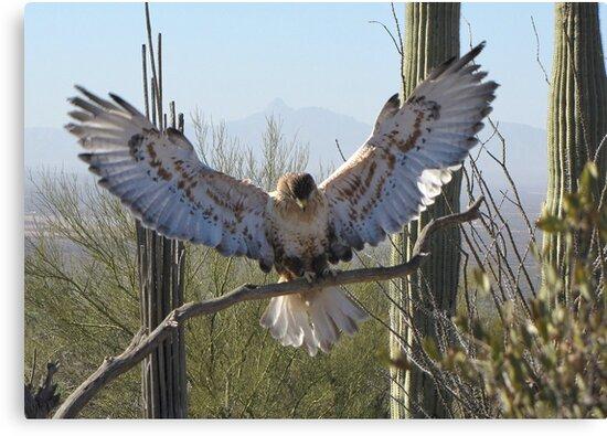 Ferruginous Hawk ~ It's Good!!!! by Kimberly Chadwick