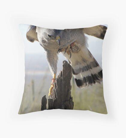Gray Hawk  Throw Pillow