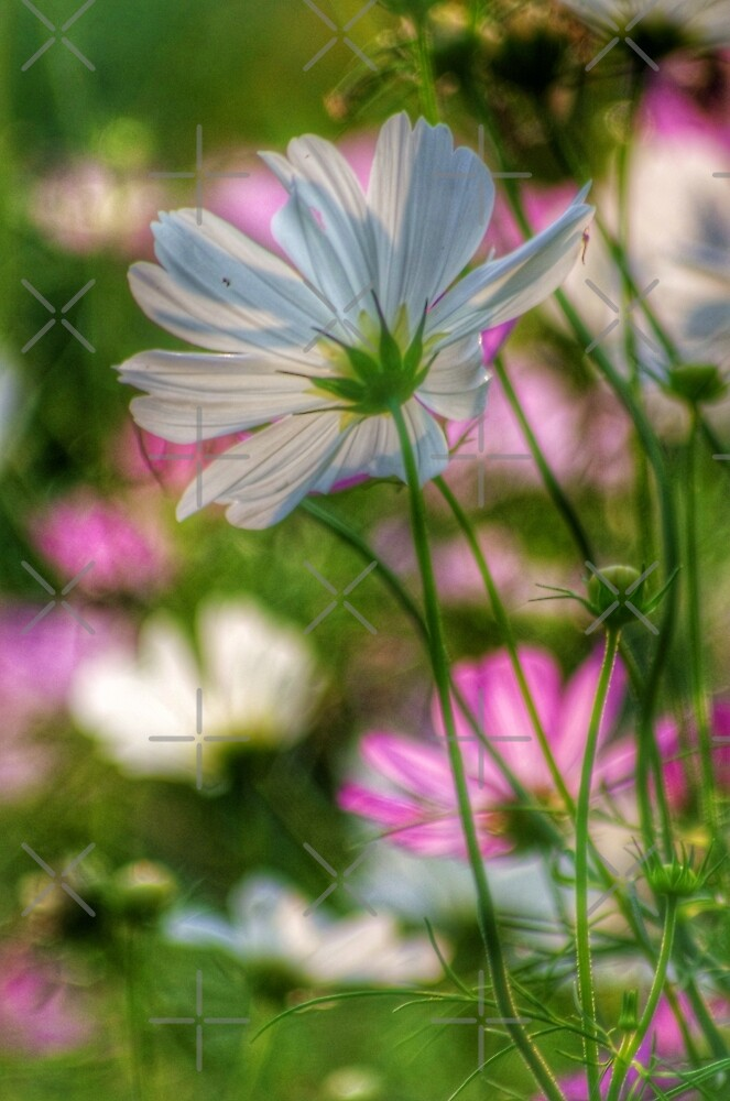 The Last of The Summer Blooms by TiltedView