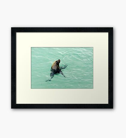 Sammy the Sealion Framed Print