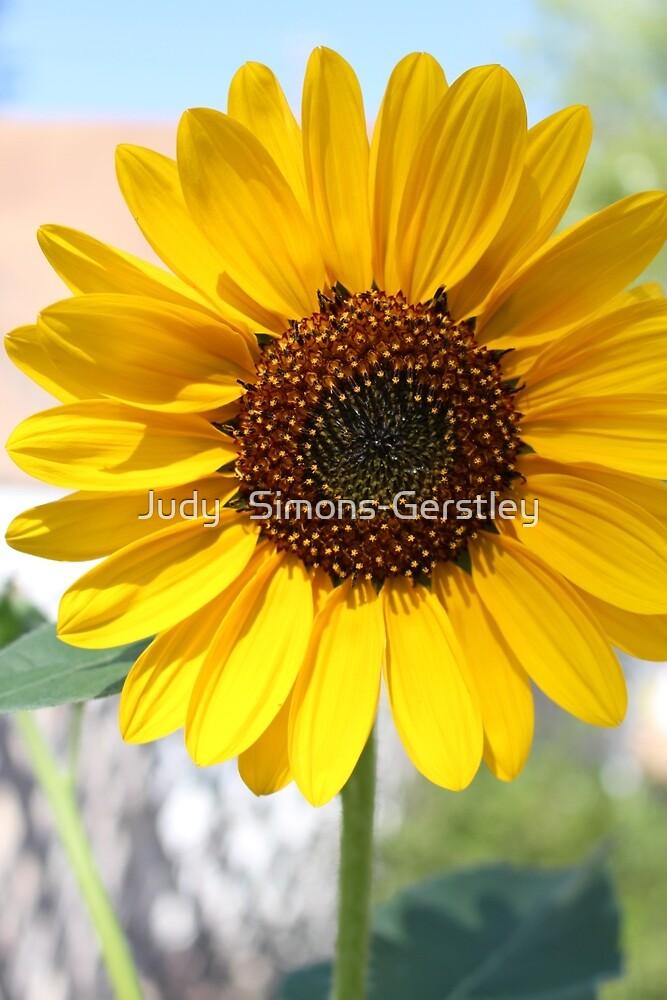 Sunflower 2015 by Judy   Simons-Gerstley