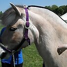 Horsefest 004 by BarbBarcikKeith