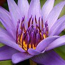 Lily Magic by Kym Howard