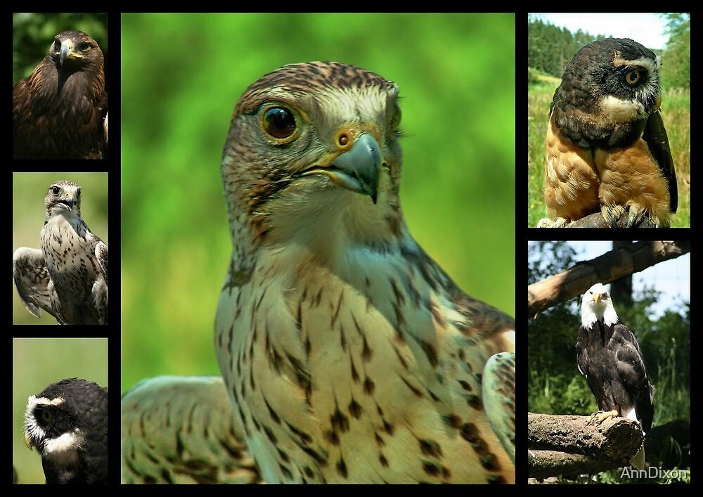 Birds of Prey Collage by AnnDixon