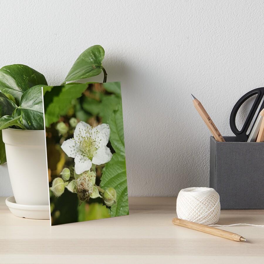 Bramble Blossom Art Board Print