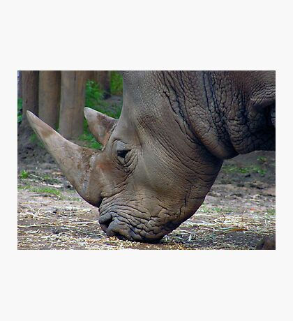 Rhinoceros Photographic Print